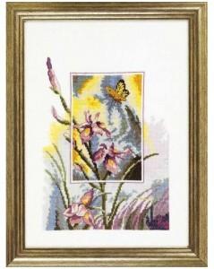 Iris w/butterfly