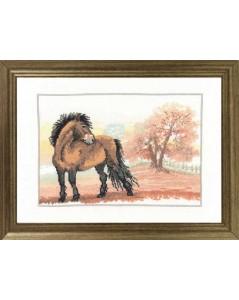 Horse in autumn