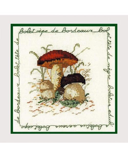Mushroom cep