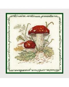 Mushroom cortinary