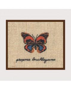 Prepona Buckleyana butterfly miniature