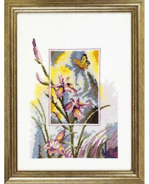 Iris m/butterfly