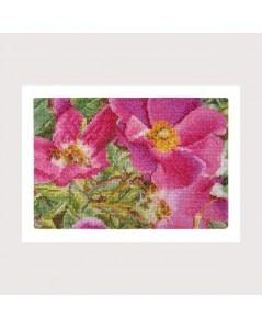 Flowers rosa Myesii
