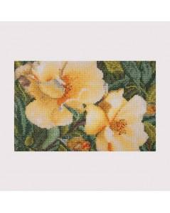 Flowers Rosa Hugonis