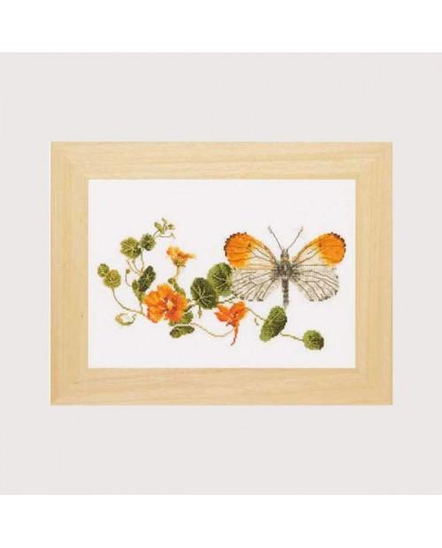 Butterfly-nasturtium