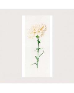 Carnation white