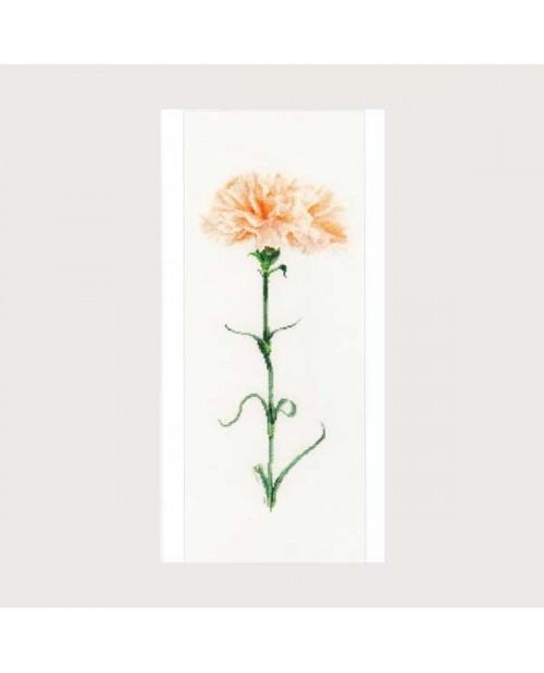 Carnation peach