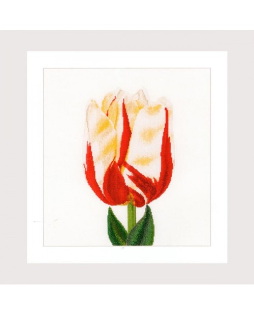 Flamed Single late tulip
