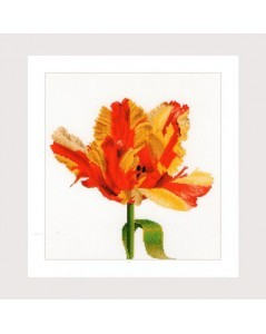 Red/yellow Parrot tulip