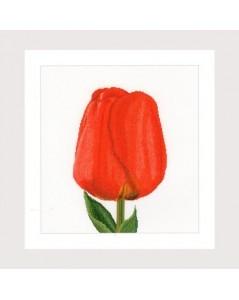 Red darwin hybrid tulip