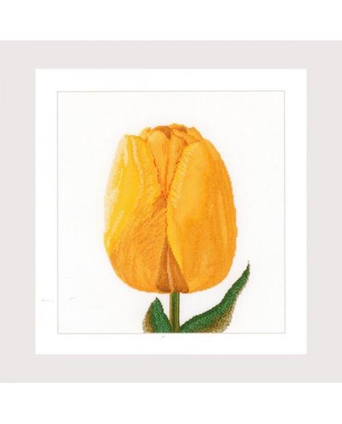 Yellow Darwin hybrid tulip