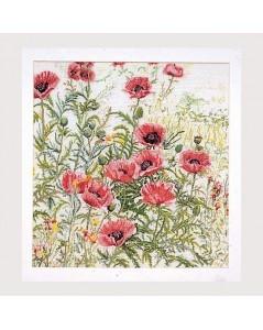 papaver rose