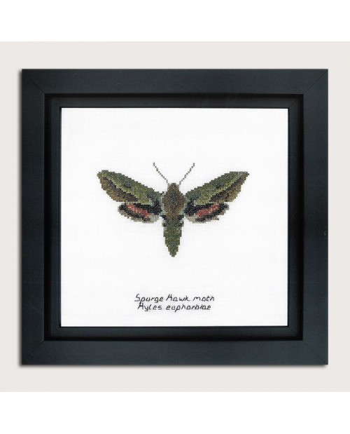 Counted cross stitch embroidery kit. Spurge Hawk moth. Thea Gouverneur. Item n° 565A