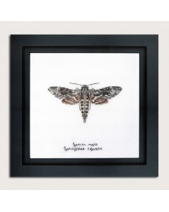 Counted cross stitch embroidery kit. Sphinx moth. Thea Gouverneur. Item n° 564A